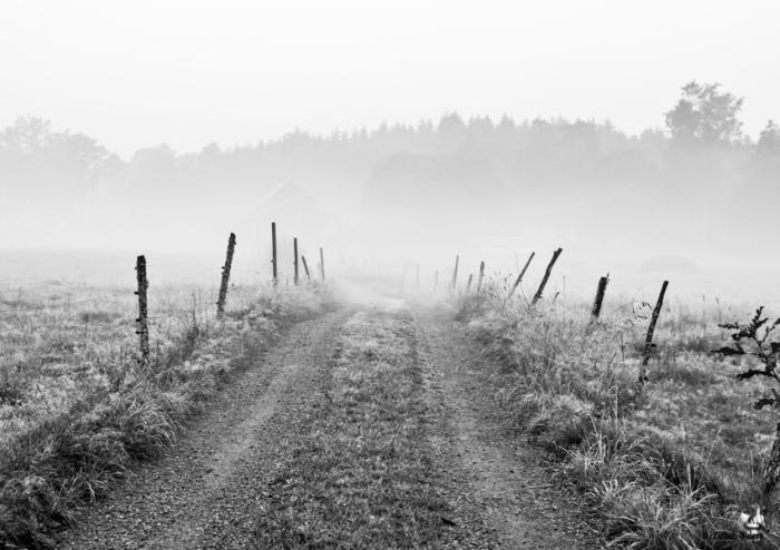 """Morgendis Mit første bidrag til Fotokonkurrencen """"Årets Naturfotograf 2015"""""""