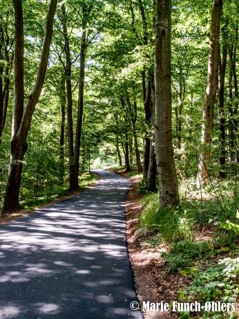 . Af svenske årsager skulle den kilometer vej midt inde i skoven, have ny asfalt.